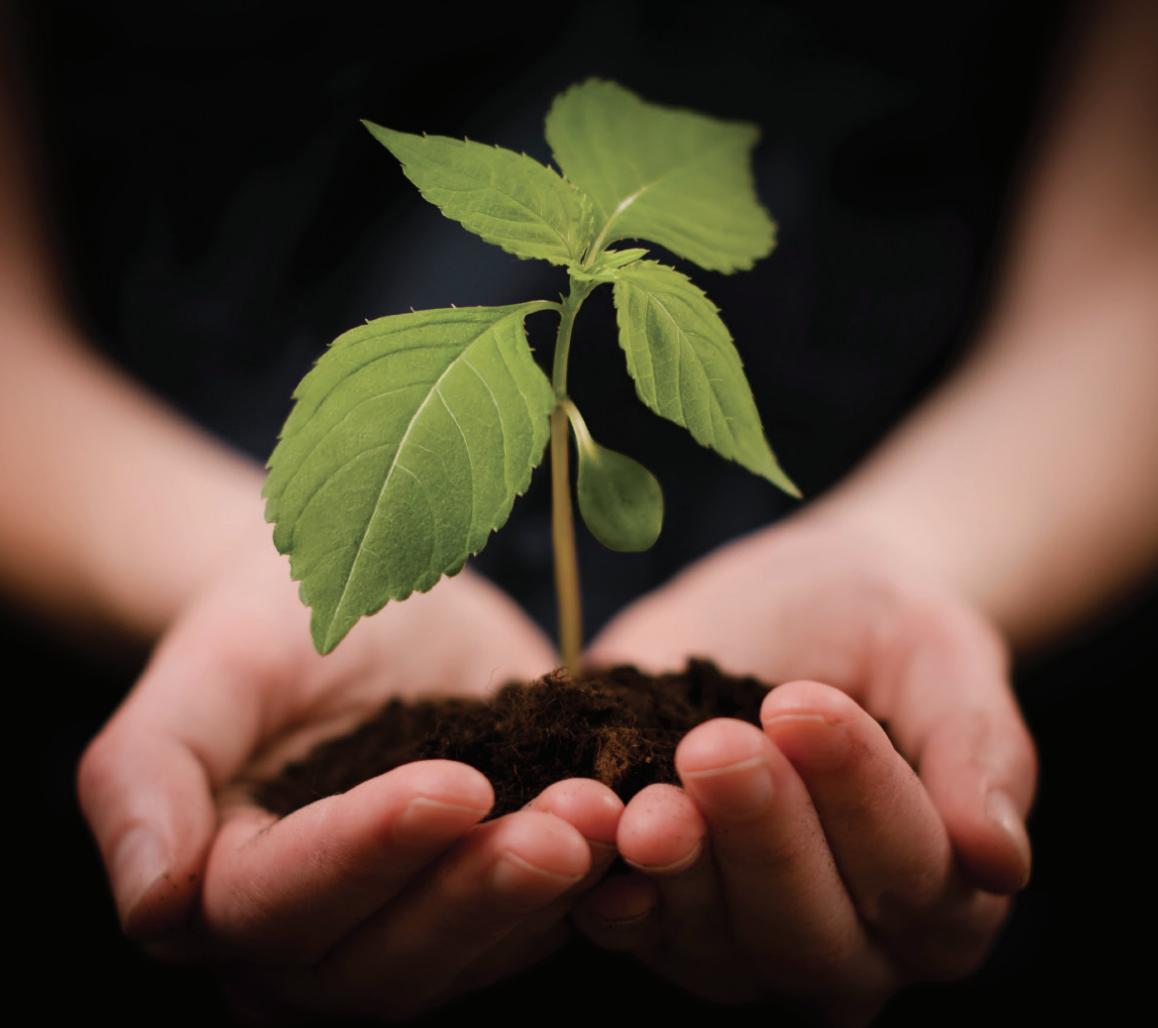 Hands Plant Growing